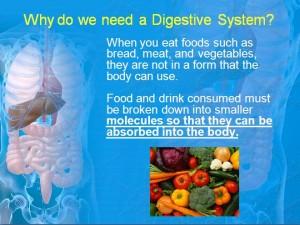 Digestive 2