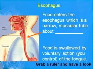 Digestive 3
