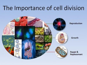 Cell Division 1