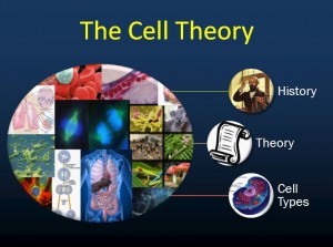 Cell Theory 1