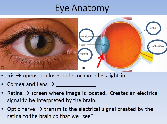 The Eye Optics Lesson High School Physics Teach With Fergy