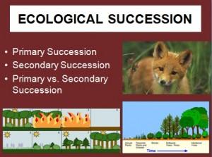 L6 Succession 1