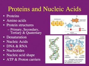 L4 Proteins 1