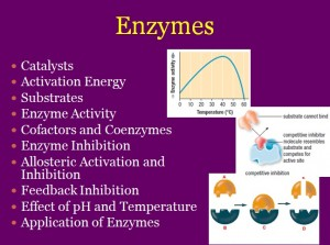 L5 Enzymes 1