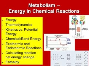 L1 Metabolism 1