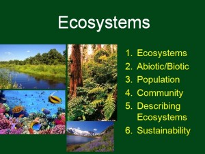 L2 Ecosystems 1