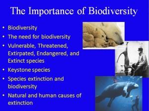L8 Biodiversity 1